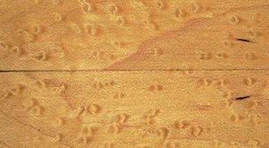 Birdseye Maple Exotic Wood